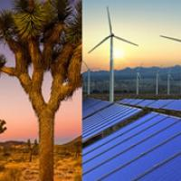 A photo collage with joshua trees, wind turbines, and solar panels. (BLM Photo)