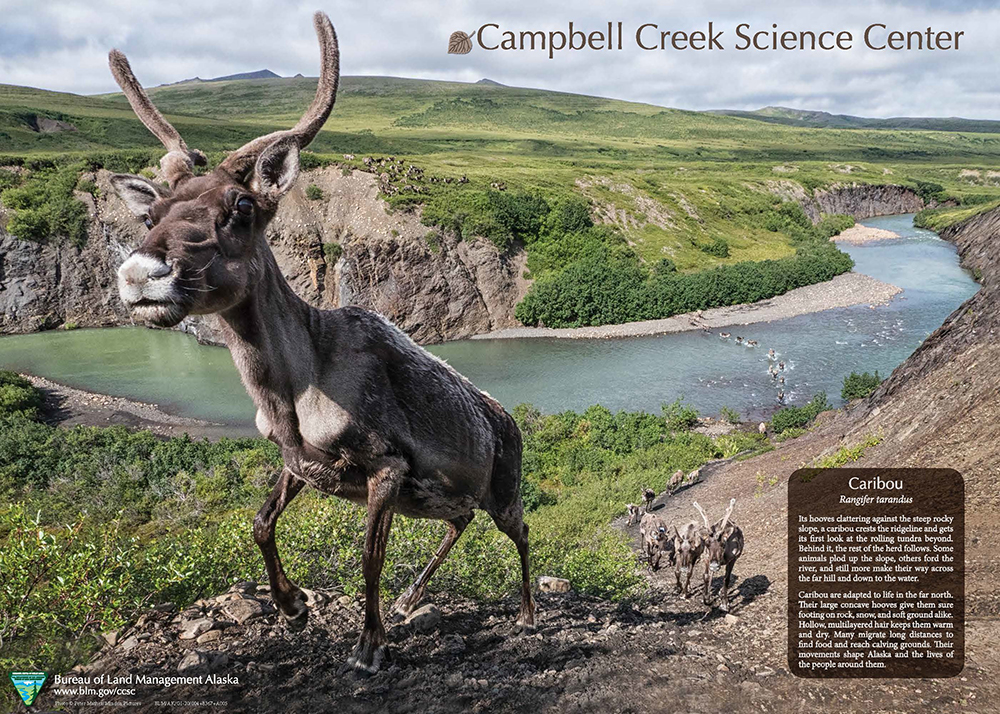 Front side of 2020 Campbell Creek Science Center Poster featuring caribou