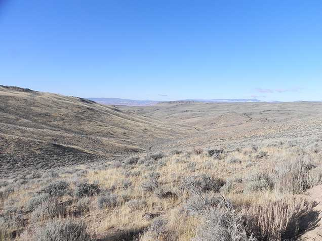 A landscape of sagebrush and grasses on a gentle hill. Photo by Amy Dumas/BLM