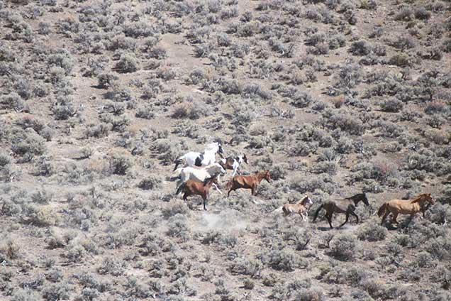 Moon Chart For Hunting: Programs: Wild Horse and Burro: Herd Management: Herd Management ,Chart