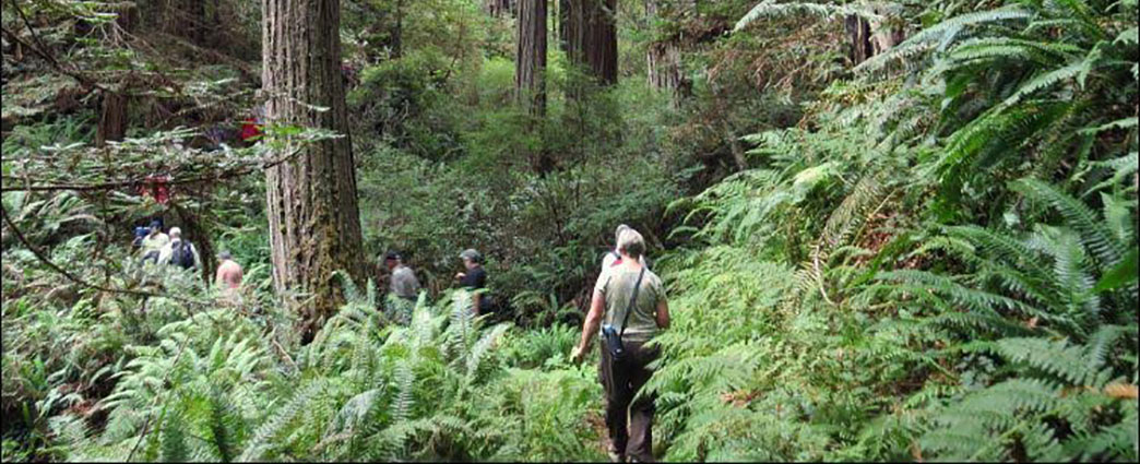 Hikers in Old Growth Redwood Forest, Salmon Pass Hike. Photo by BLM