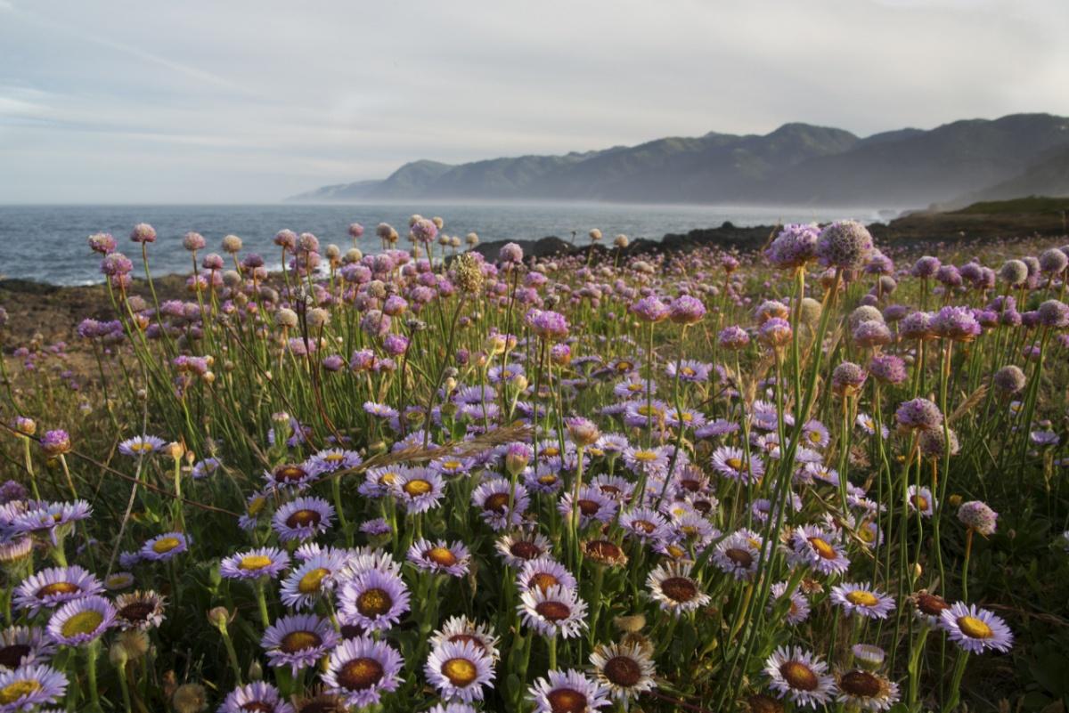 Plant Conservation Alliance | BUREAU OF LAND MANAGEMENT