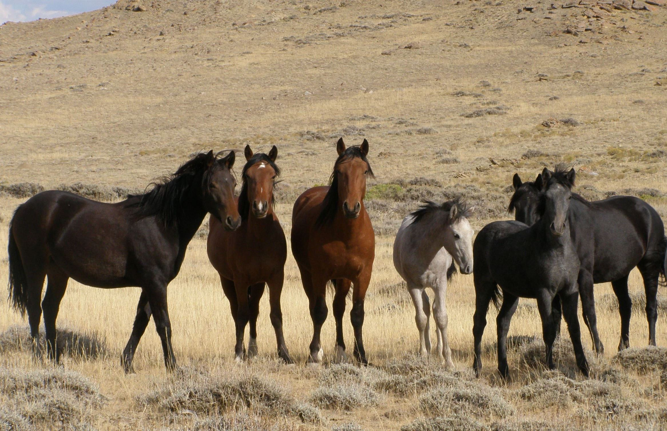 A Group Of Wild Horses On The Range