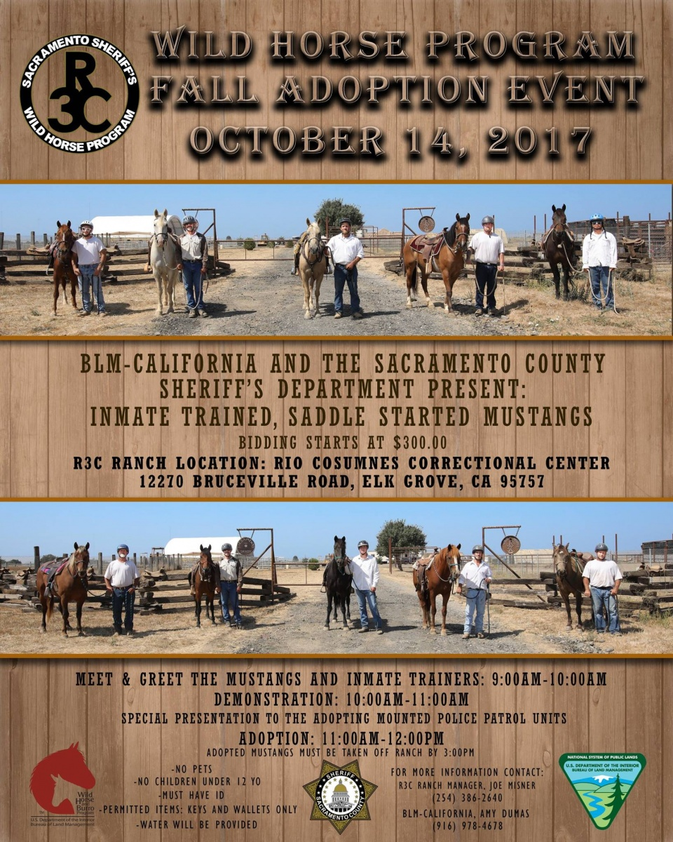 Programs Wild Horse And Burro Adoption And Sales