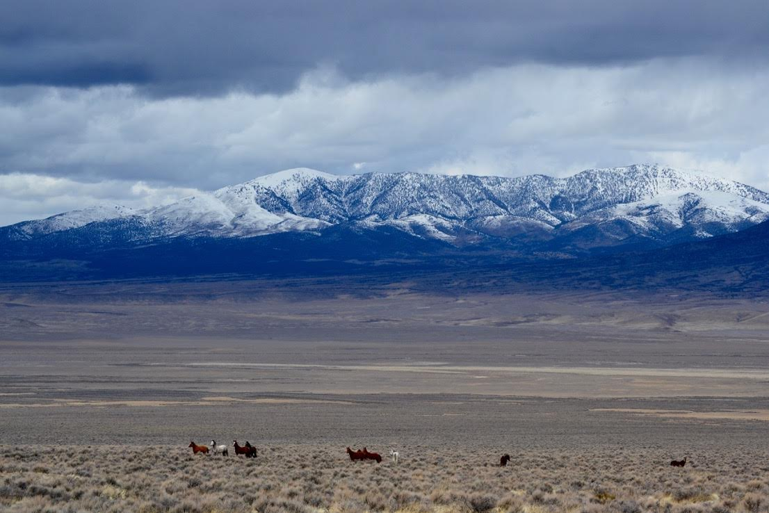 Wild horses running on a plain in front of a mountain.