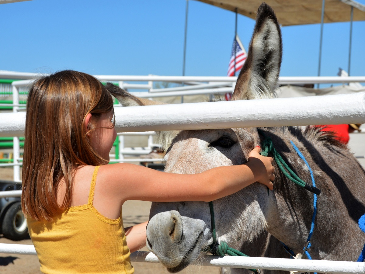 Young girl pets a wild burro up for adoption. BLM photo
