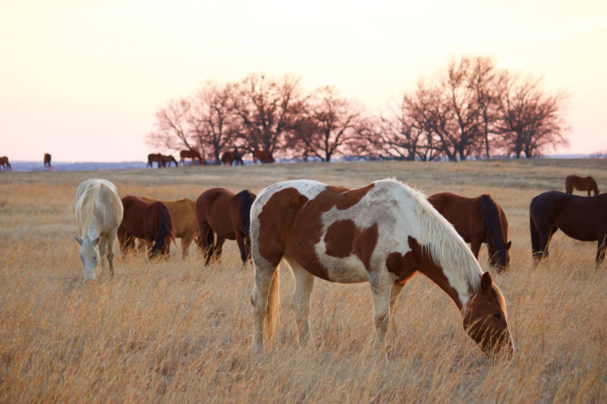 Several wild horses in a pasture at sunset.
