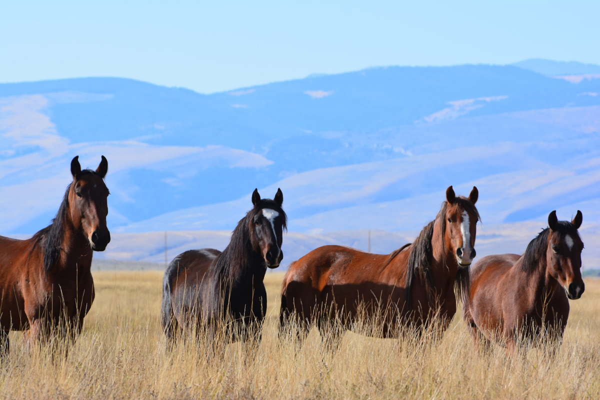 Four horses standing in a field.