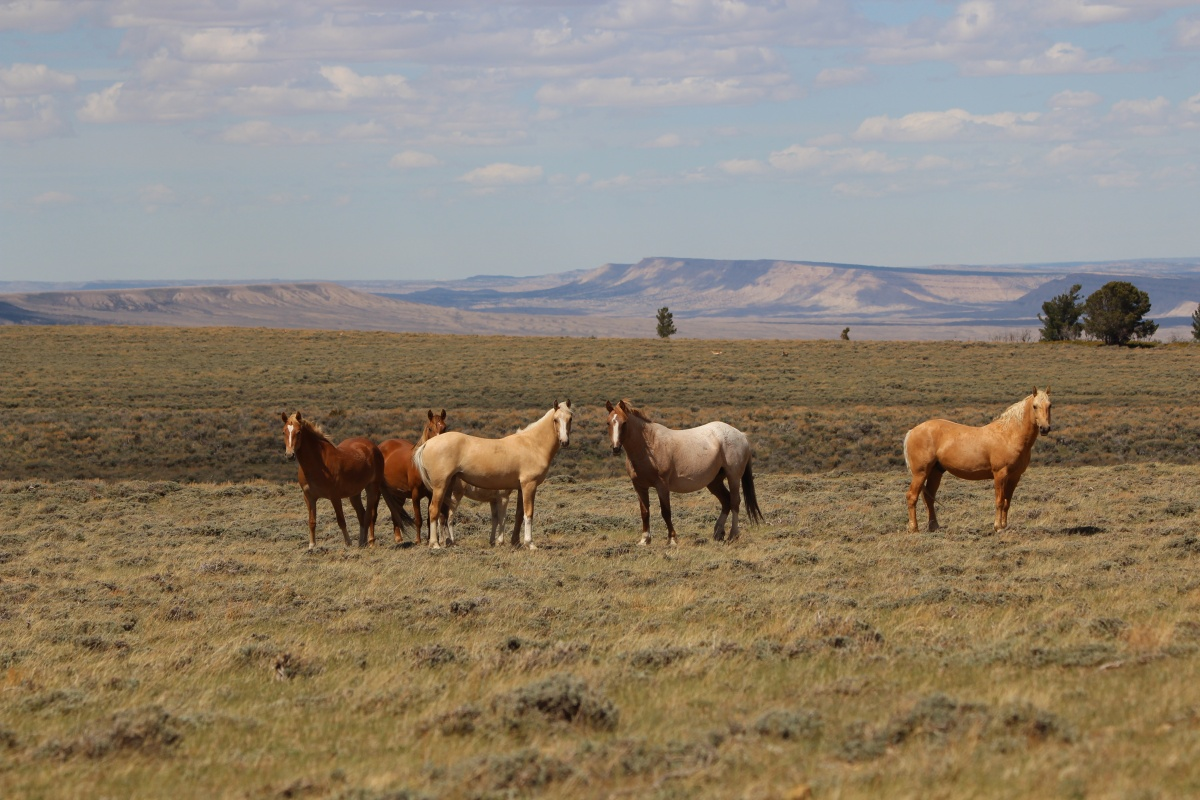 blms wild horse management essay The bureau of land management roundup of wild horses in cold creek is quite las vegas review-journal 49°f blm's wild horse program should ride off into.