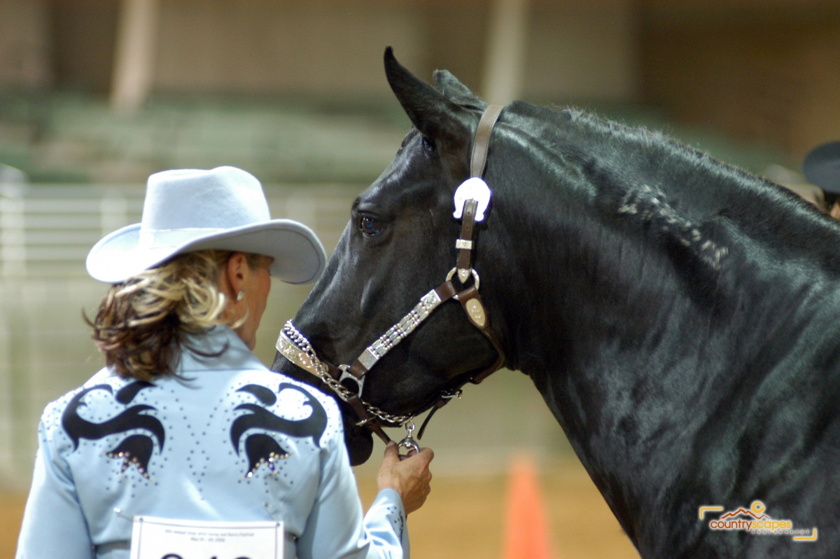 Wild horse and owner stand at a show.