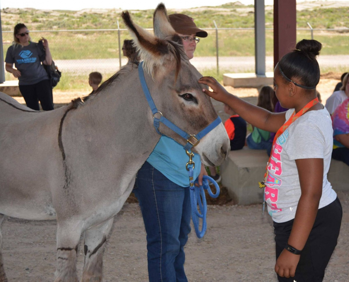 BLM volunteer introduces wild burro to young girl. BLM photo