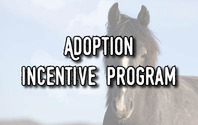 A horse face with the words Adoption Incentive Program