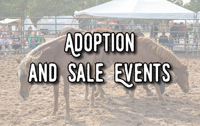 "A group of horses in a pen with the words ""Adoption and Sale Events"""