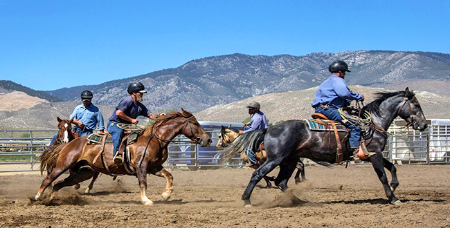 Northern Nevada Correctional Center Horse Facility | Bureau